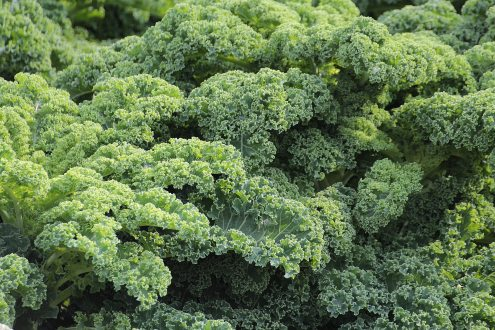 green-plant-51372